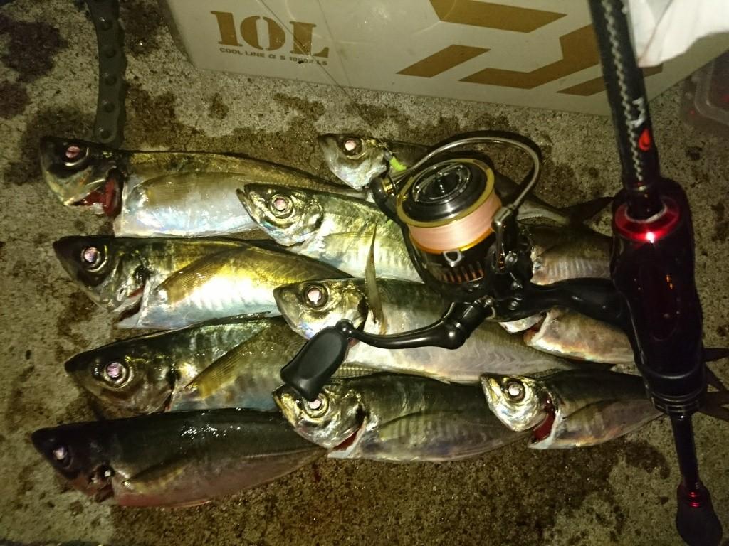 まだまだ釣れる横浜アジング♪