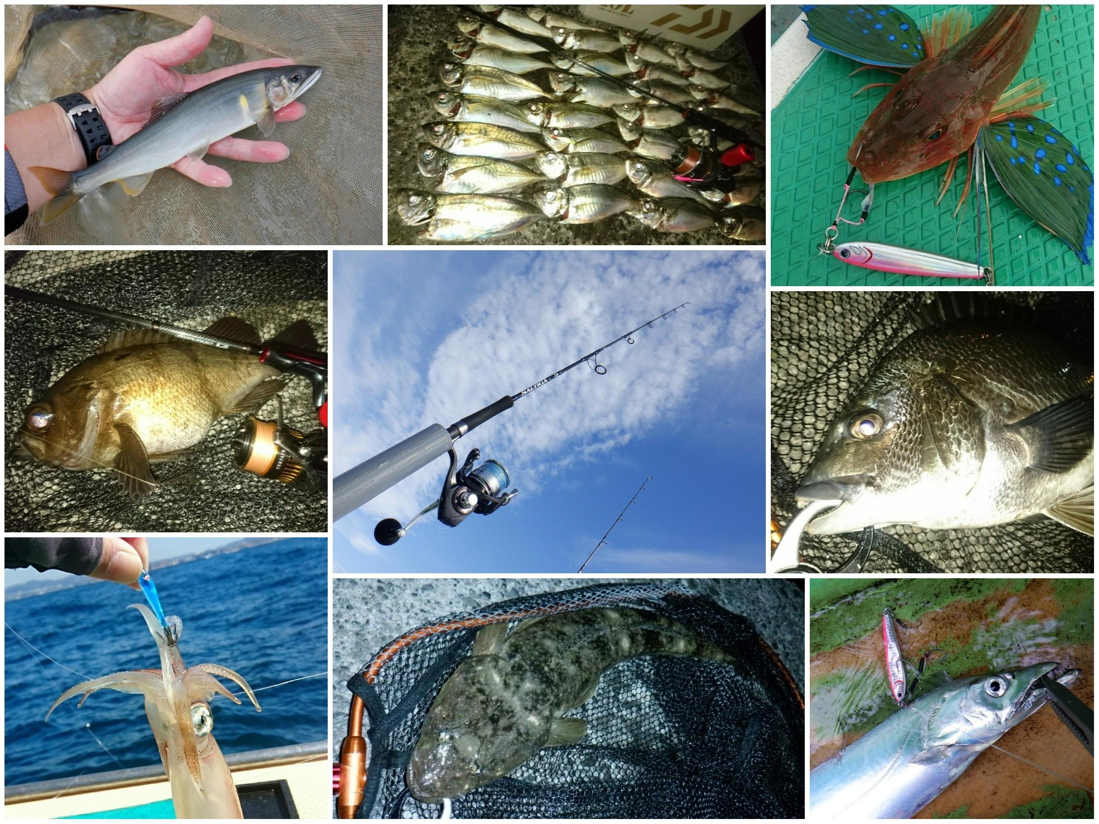 2019年の釣行を集計♪~全114回の記録~