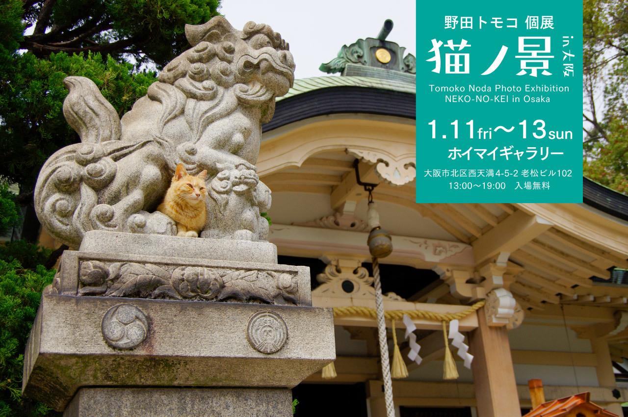 nekonokei2019osaka-banner.jpg