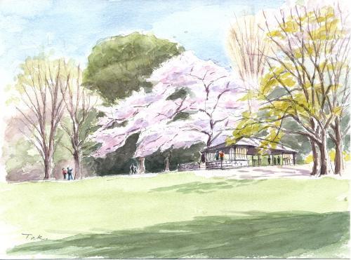 砧公園の桜と東屋(合成Arc修正)_convert_20190409112105