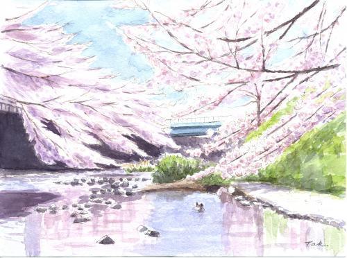 恩田川の桜(上流)(合成Arc修正)_convert_20190412175251