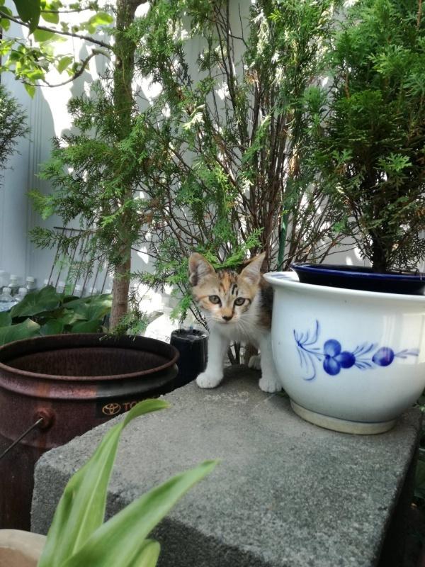 190824三毛猫2