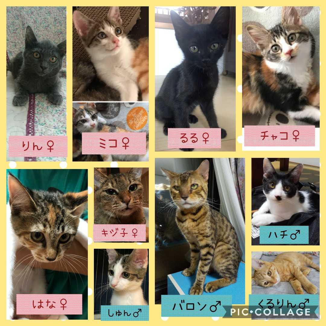 190915参加の猫たち