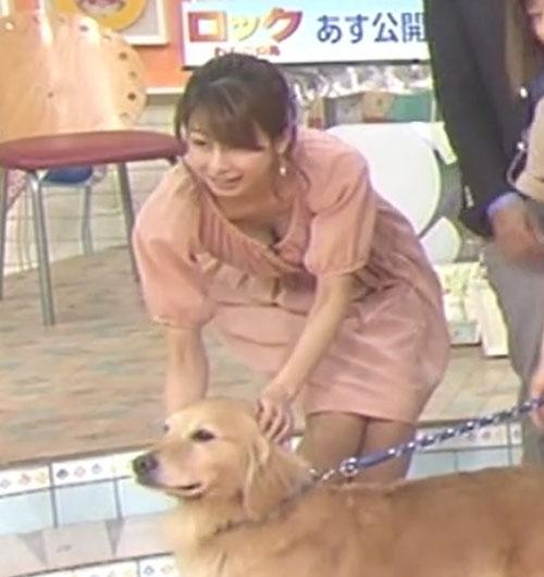 加藤綾子アナ、おっぱい見えGIFがエロ過ぎる!動物に夢中でガッツリ見せるw