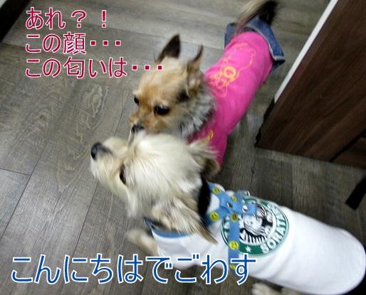 。ポルコちゃん17 0629.jpg