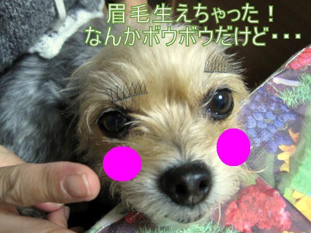 IMG_4929-001.JPG