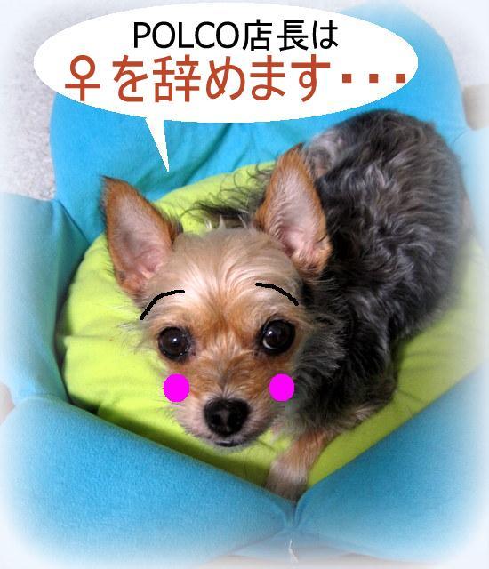 IMG_3776-001.JPG