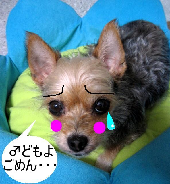 IMG_3777-001.JPG