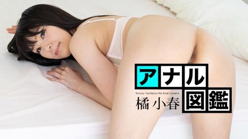 アナル図鑑 橘小春 -カリビアンコム