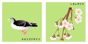 京都の鳥と花