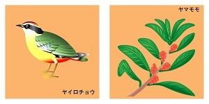 高知県の鳥と花