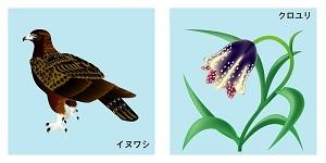 石川県の鳥と花
