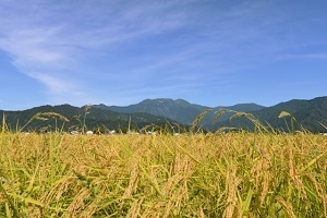 新潟県といえば1