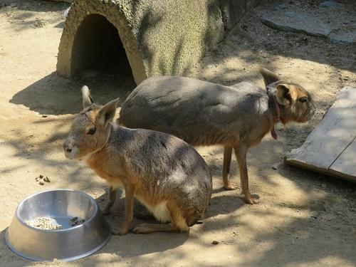 2020 3 23 お城の動物園